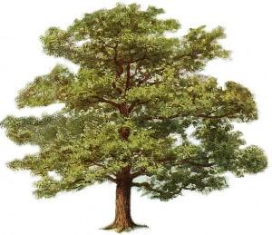 tree-clipart-4